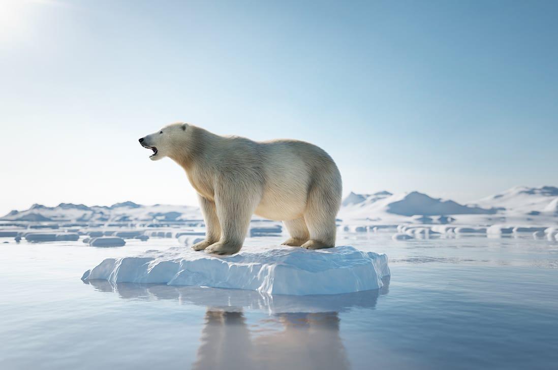 UNO INO - CO2-Messung und Reduktion und Kompensation